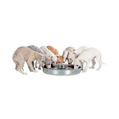 Ciotola-per-cuccioli-piccoli.jpg
