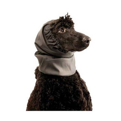 Paraorecchie-per-cani.jpg